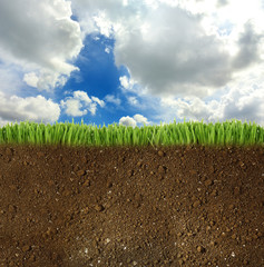 Springtime, conceptual image. Green grass with soil