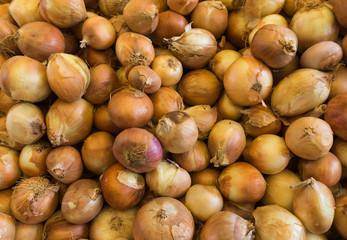Fresh onion.  onions background