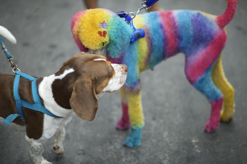 Dog Painted Bright Colors at Rio Animal Carnival