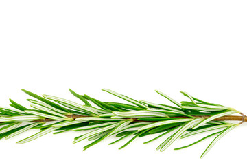 Beautiful macro background texture of green rosemary with copysp