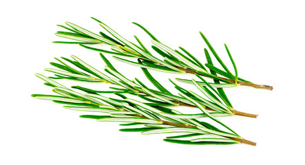 Rosemary herb isolated on white