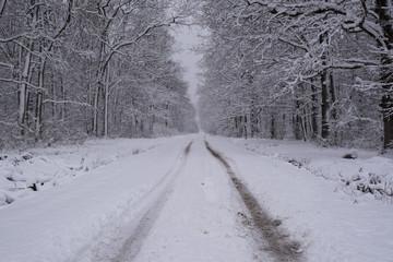 snowy turopolje landscape
