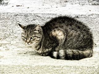 cat (342)
