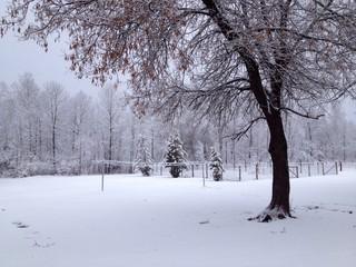 fresh snowfall scene