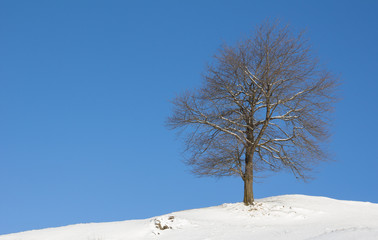 Winter Landscape Tree With Snow And Blue Sky
