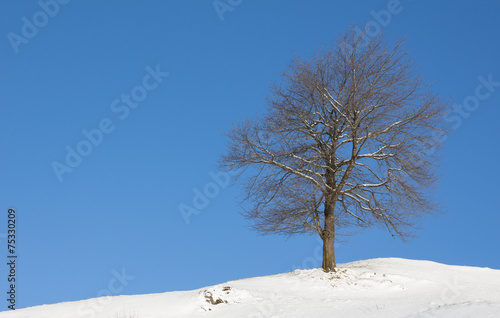canvas print picture Winter Landscape Tree With Snow And Blue Sky