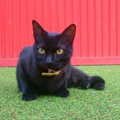 Gato negro sobre fondo verde y rojo