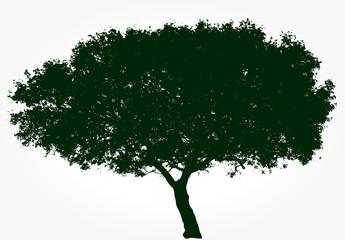 black wide tree