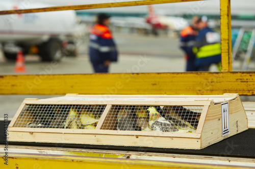 Foto op Aluminium Papegaai Parrots for sale