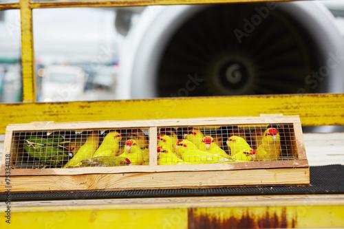 Tuinposter Papegaai Parrots for sale
