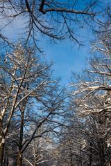 Bäumkronen vor Himmel im Winterlandschaft