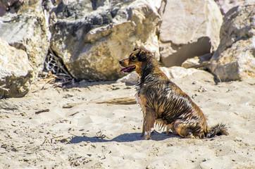 Cane in attesa sulla spiaggia