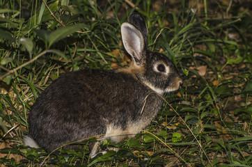 Coniglio nel bosco