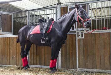 Cavallo in scuderia 2