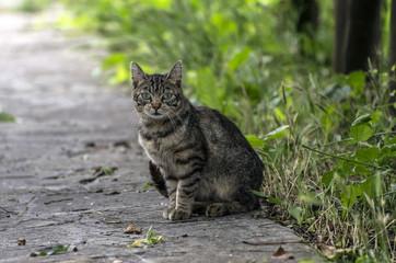 Gatto guardingo