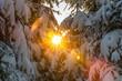 Winter forest sunrise light