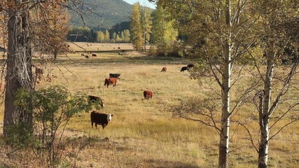 Coldwater River Valley Pasture