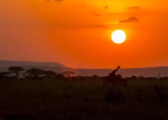 Jambo Serengeti!