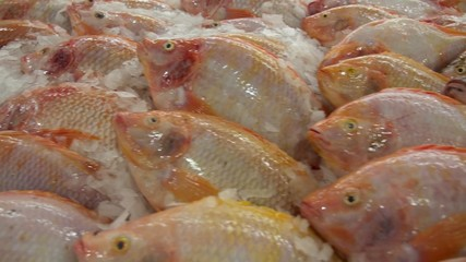 Fresh Fish on Ice in Supermarket
