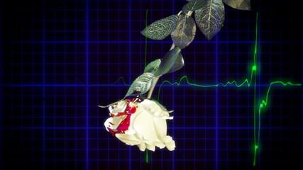 EKG heartbeat white rose blood drops