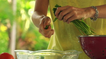 Woman hands tearing spinach leaves into glass bowl, slow motion