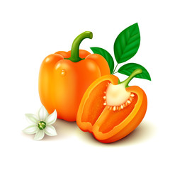 Orange bell pepper (bulgarian pepper) on white background