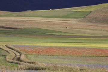 Casteluccio di Norcia,fioritura della lenticchia, tutti i colori