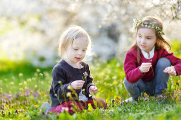 Two cute little sisters in blooming cherry garden