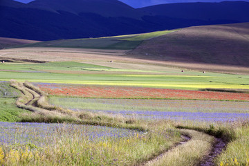 Casteluccio di Norcia, fioritura della lenticchia, una stradina