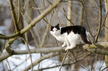 Cute cat at winter