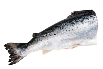 Atlantic salmon isolated  on white with clipping path