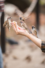 feed a bird