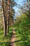 pinewalk