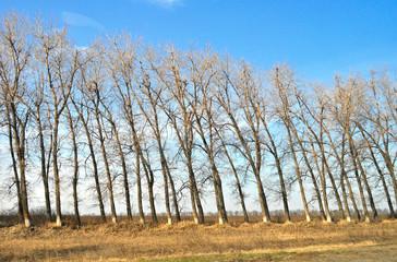 tilted tree