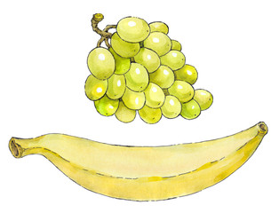 Watercolor painting of a set of fruit: grapes and banana