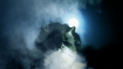 Killer catface knife night moon threat smoke