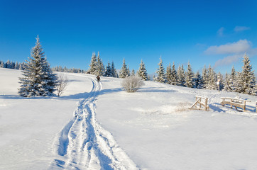 Beautiful winter landscape with snow-covered pines and trail
