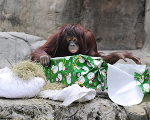 Unwrapping Christmas at the Zoo