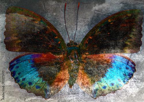 Fototapeta butterfly