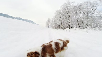 Happy dog in the snow