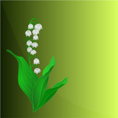 Lily of the Valley background place for text vector
