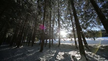Winter, Wald, Schneelandschaft