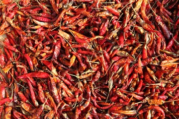 Chili peppers drying in sun in Bangkok