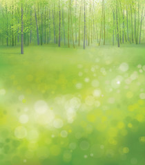 Vector spring  forest background.