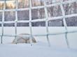 Leinwanddruck Bild - Snowy soccer field