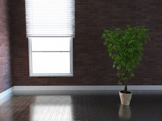 Plant in a dark room