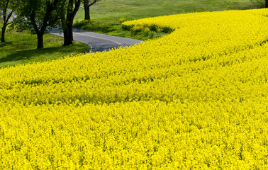 Springtime Wildflowers In Eastern Tennessee