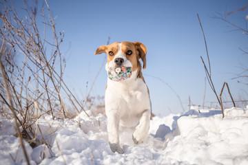 Winter fun with dog