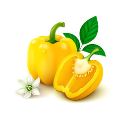 Yellow bell pepper (bulgarian pepper) on white background