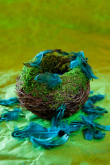 Empty nest with turquoise feathers